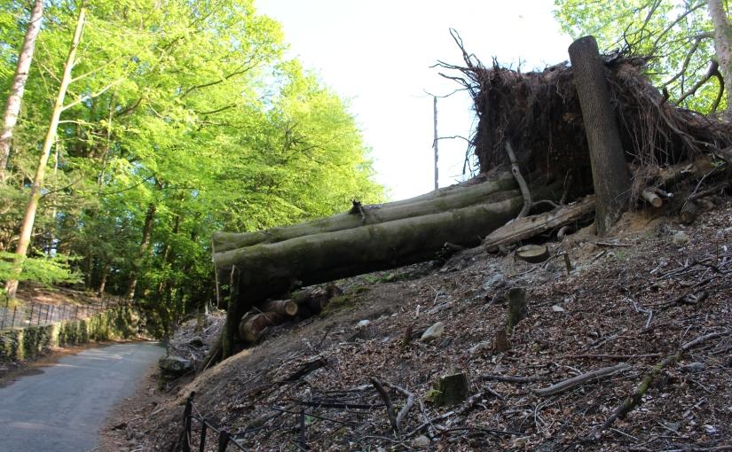 CO2-Neutralität – oder Waldverbrennen für denUmweltschutz?